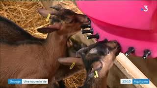 Ils changent de vie pour devenir éleveurs de chèvres