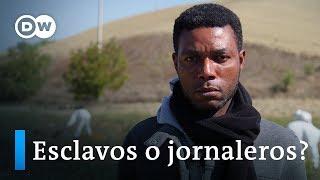 ¿Esclavitud en Italia? | DW Documental