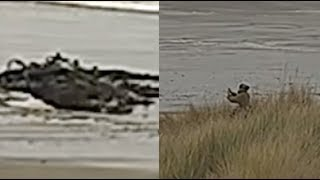Mysterious creature CAPTIVATES people on beach! - Washed ashore by huge waves