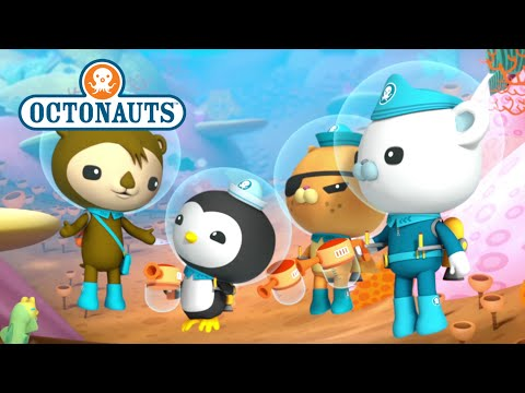 Octonauts: Super Compilation!