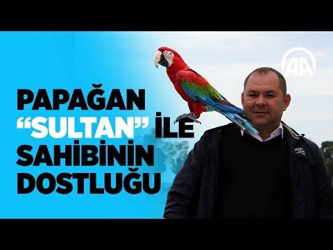 Papağan Sultan ile sahibinin dostluğu
