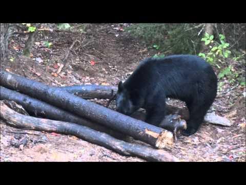 Marcus Kullman's Upper Peninsula Michigan Bear Hunt 2012