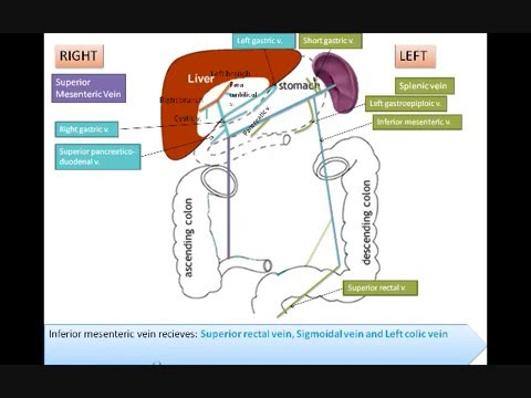 How to remember Hepatic Portal System? - YouTube