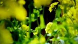 Wallander BBC One - Sidetracked - Opening scene