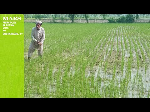 Principles in Action 2015 – Rice Farming
