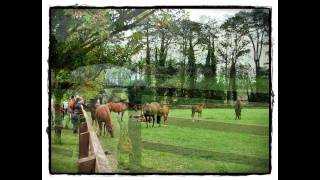 Japanese Gardens & Irish National Stud (Kildare, Ireland)