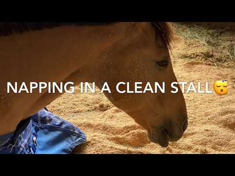 Housekeeping In The Barn: Equine Crossword Puzzle Activity
