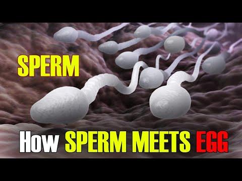 Fertilization | How Sperm Meets an Egg? Fertilization I Incredible 3D Animation!