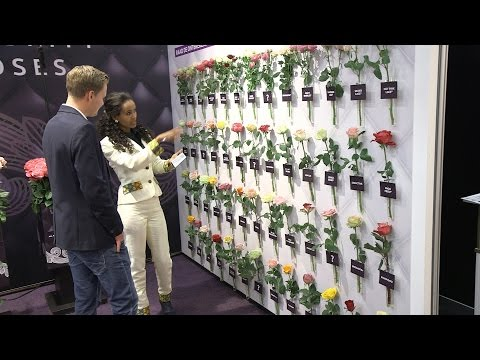 This is the Royal FloraHolland Trade Fair 2016 (Day 1)