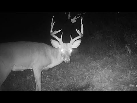 Check Out These Bucks In Bureau County Illinois!!