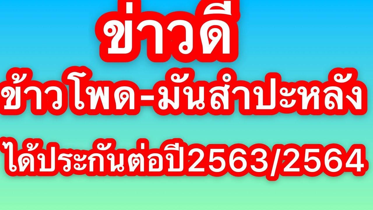 ข่าวดี เกษตรกรผู้ปลูกข้าวโพดเลี้ยงสัตว์และมันสำปะหลังได้ประกันรายได้ต่อ ปี2563/2564
