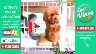 Funny Video Dogs Compilations 2016 #12