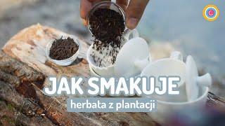 Terroir: cechy plantacji a smak herbaty. Czajnikowy.pl