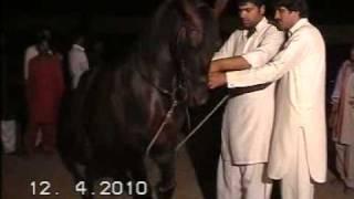 Nisar Stud Farm, Mela Ghora Dance Korotana 2010, Horse Dancing in Pakistan,