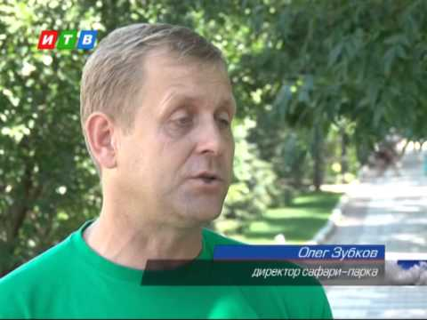 В Белогорском сафари парке появилось на свет чудо