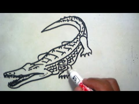 Cara Menggambar Buaya How To Draw A Crocodile Youtube