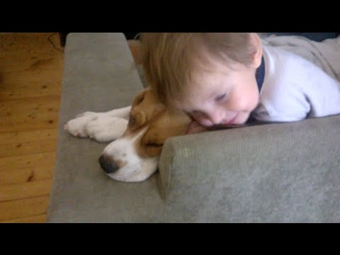 beagle and baby: best dog with a baby!