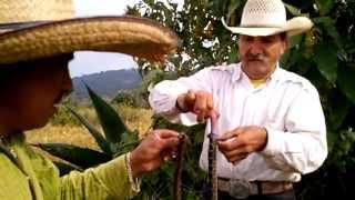 Viboras de cascabel Otumba de Gomez Farias