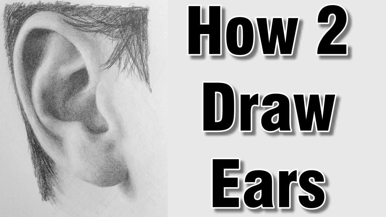 How to draw ears in pencil drawing