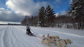 Снегоходы или собаки? Больше скорости, больше драйва! Активный отдых и зима в Щукино!