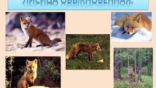 разнообразие природы