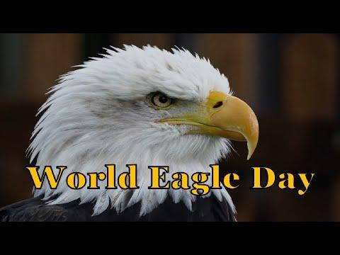 World Eagle Day 2018 (World Bird Sanctuary)