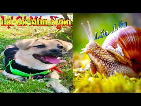 Dương KC   Bông Bé Bỏng Ham Ăn #18   chó thông minh vui nhộn   funny cute smart dog pets Thú Cưng TV