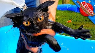 Little kitten Puff takes a bath🐾 We bathe a kitten! The kitten is in shock! Funny cats💝