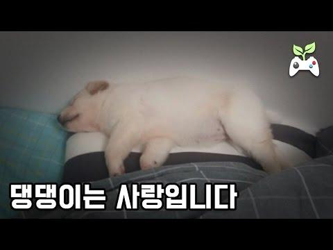 댕댕이는 사랑입니다 (강아지 입양 첫날)