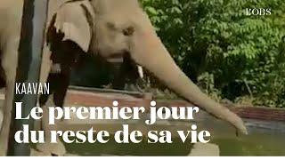 L'émouvant sauvetage de l'éléphant Kaavan, le protégé de Cher