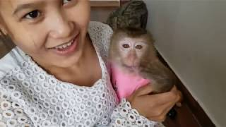 Monkey Baby Nui | Mom prepared to let Nui go to Pon