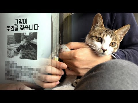 Finding the 7th Cat's Owner, Trimming Her Nails, and Cleaning out Her Ears 【SURI&NOEL】