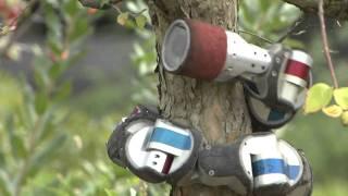 Snake Robot Climbs a Tree