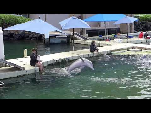 waikoloa-village,-hawaii---hilton-waikoloa-village---dolphins-(2018)