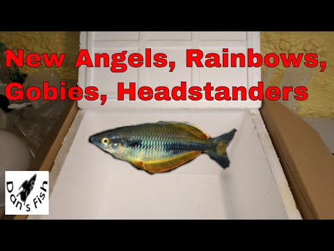 Unboxing RARE Rainbowfish And MORE!!!