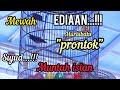Ediaan Muntah Isian Mewah Sujud Muraibatu  Prontok  Mp3 - Mp4 Download