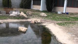 00046 - Ванга(, 2012-02-03T11:43:27.000Z)