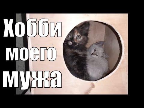 Вопрос: Как интересно назвать котенка черепахового окраса , девочку?