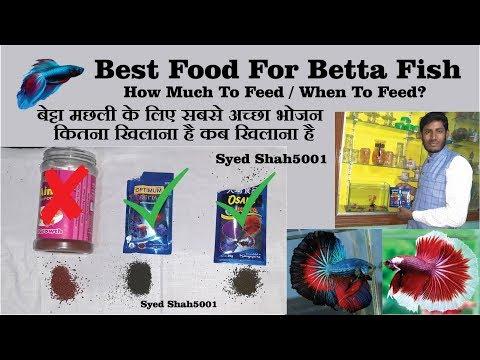 Best Food For Betta Fish For Fast Growth ,Dark Colour,Fins Growth बेट्टा मछली के लिए सबसे अच्छा भोजन