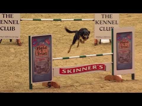 The Kennel Club ABC Dog Agility Final at Olympia 2017