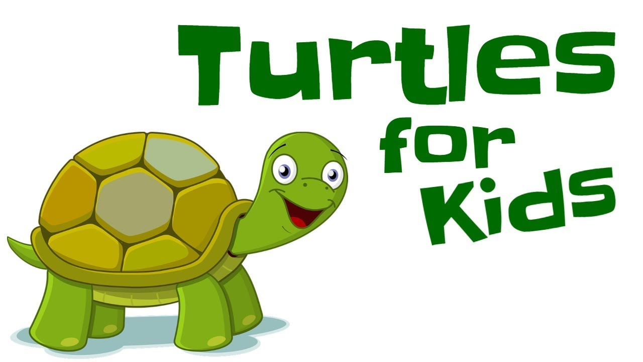 Turtles for Kids