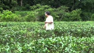 CSR Social Business Fu Shan Tea Farm- Giving Back to Nature