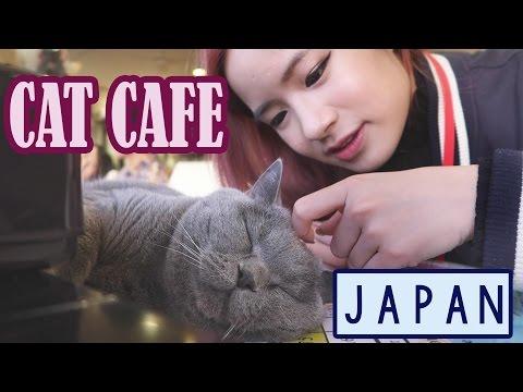 Cat Cafe in JAPAN | Ueno & Asakusa