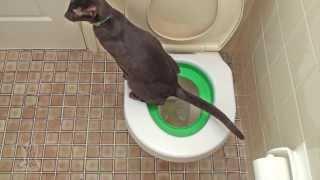 Приучите и вы свою кошку к унитазу! Litter Kwitter в России!