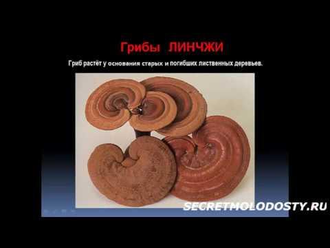 высшие грибы образованы мицелием