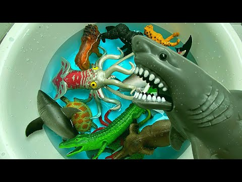 Learn Sea Animals Wild Animals name in English 바다 동물을 배우세요