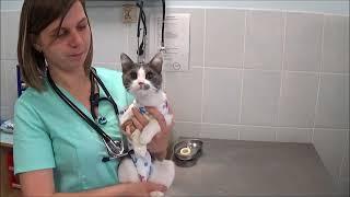 """Стерилизация кошки в ветеринарной клинике """"Алисавет"""" в Бутово"""
