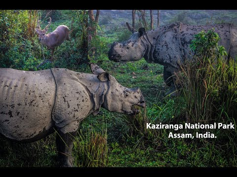 Kaziranga National Park, Travel Video and Safari !