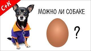 Можно ли собаке яйца?
