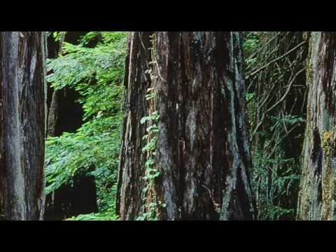 Islands of Wildness - Climate Change, North America HD